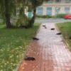 Дождь из мертвых ворон